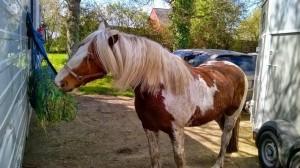 rando cheval 3